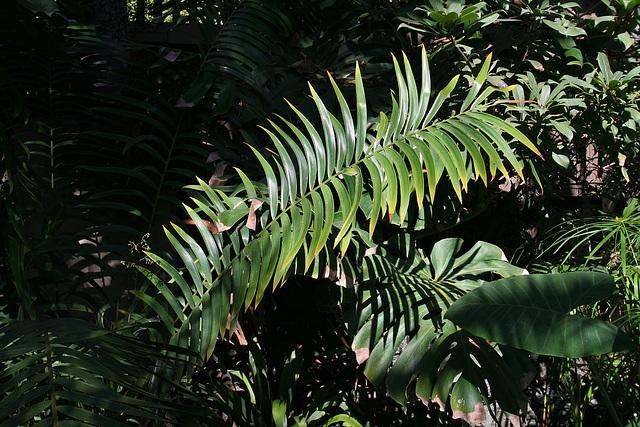 Balboa Park Botanical Pavilion (8093)