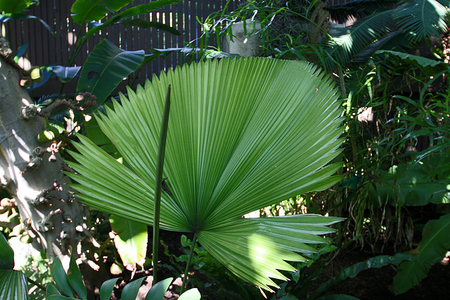 Balboa Park Botanical Pavilion (8095)