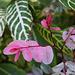 Balboa Park Botanical Pavilion (8109)