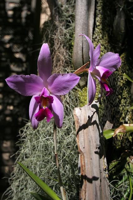 Balboa Park Botanical Pavilion (8110)