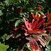 Balboa Park Botanical Pavilion (8118)
