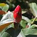 Balboa Park Botanical Pavilion (8120)