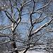 20101218 9003Aw [D~LIP] Baum und Schnee