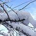 """20101218 9008Aw [D~LIP] """"Schneemann"""" auf Baum"""