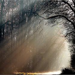 pluie de lumière...