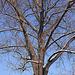 20101218 9039Aw [D~LIP] Baum und Schnee