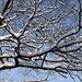 20101218 9004Aw [D~LIP] Baum und Schnee
