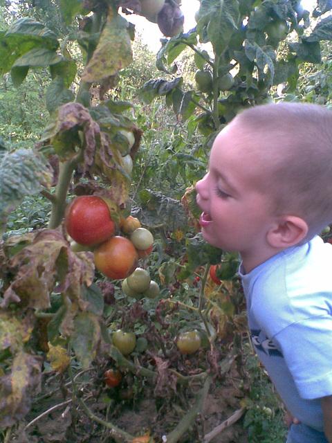 Botond ŝatas la tomaton