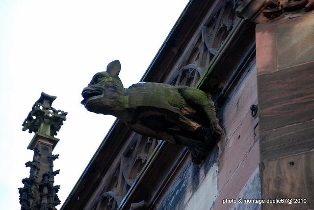 Strasbourg :la Cathédrale 71 gargouilles