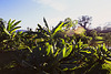 Menglun Tropical Botanic Garden