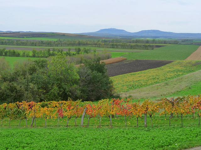 melancholische Landschaft am Nordrand von Niederösterreich