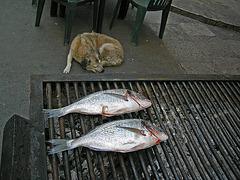 heute gibt es Fisch - 1