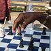 07.Chess.DupontCircle.WDC.5July2010