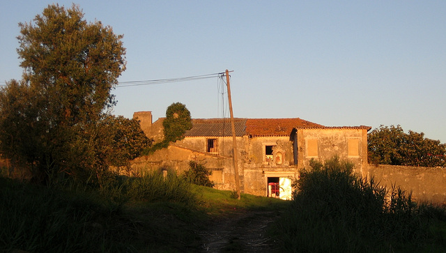 Benfica, a farm in the middle of the city (7)