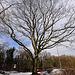 20110108 9196Ww [D~LIP] Baum