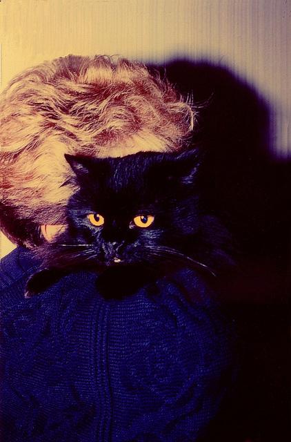 Avec Shalimar mon chat adoré( photo dédiée à Bluff, son âme soeur, et à son maître)