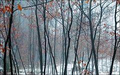 tenderforest