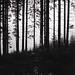 Balade en forêt .