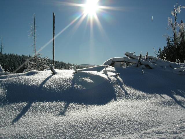 Eisblumen auf dem Schnee