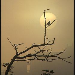 foggy sunrise..