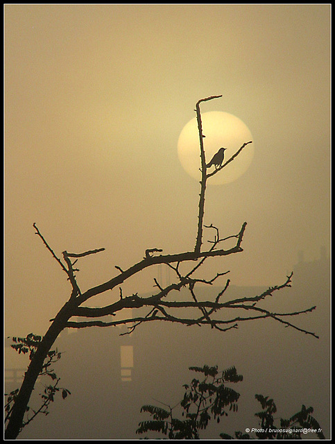 foggy sunrise..