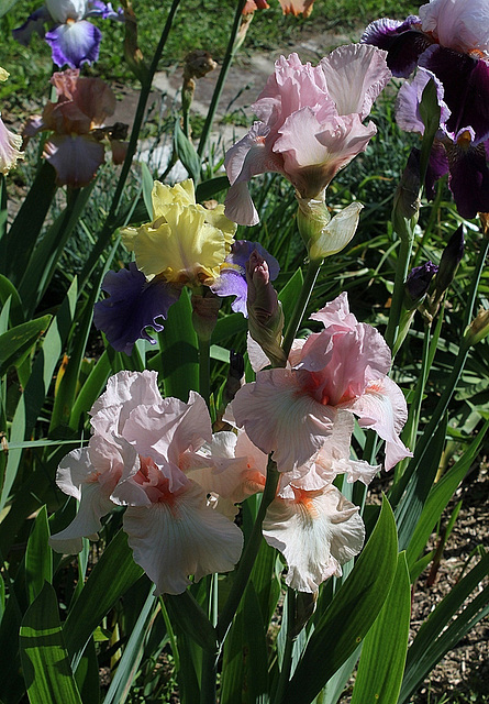 Iris Vanity (2)