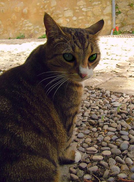 La photo de chat de Valériane