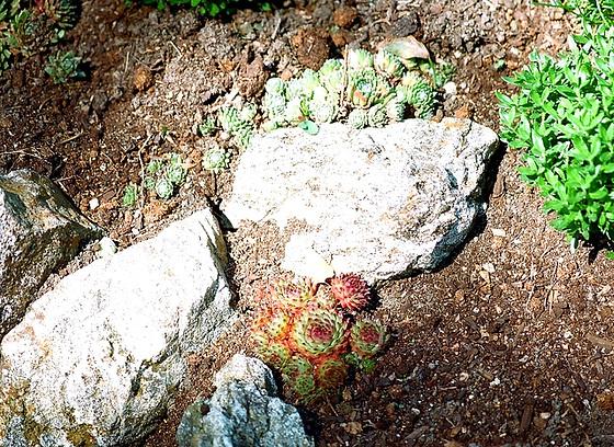 rénovation d'une rocaille 9744210.a7501043.560
