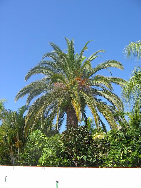 AnnaMaria ..  Siam Gardens