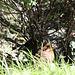 20100824 7581Tw [D~LIP] Schwarzdrossel, Bad Salzuflen