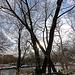 20110108 9201Ww [D~LIP] Werre-Hochwasser