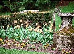 Amphore et tulipes