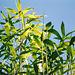 Bambous (2)