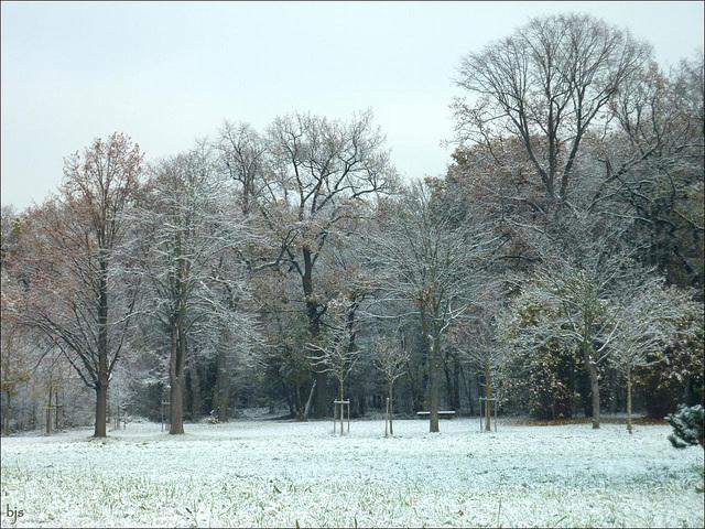 Neige au bois