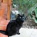 Hacienda Hot Springs Inn - DHS Spa Tour 2011 (8797)
