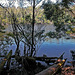 South Arthur Forest Resort