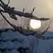 Zweige vor Sonne