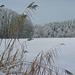 ...still und starr liegt der See, weihnachtlich glänzet der Wald....