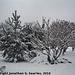 Snow in Haje, Edited Version, Prague, CZ, 2010