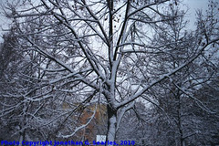 Snow in Haje, Picture 4, Edited Version, Prague, CZ, 2010