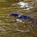 Catfish pond