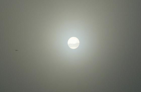 Nebel - Sonne - Vogel im Elbtal - 10.01.2011