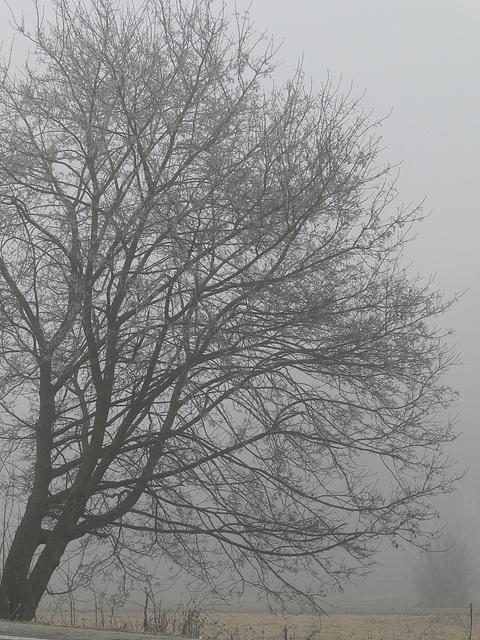 Nebeltag in der Oberpfalz 3