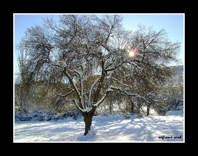 la visite de la neige