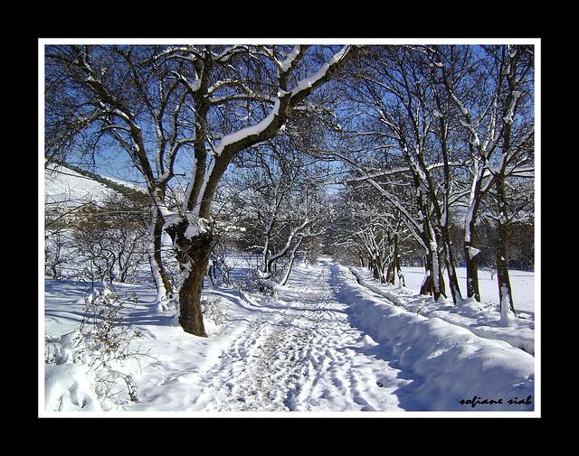 mon chemin hiver