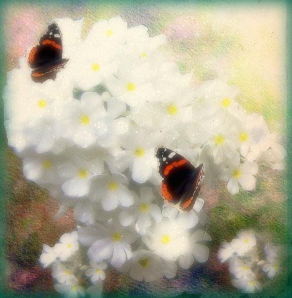 Même pour le simple envol d'un papillon, tout le ciel est nécessaire