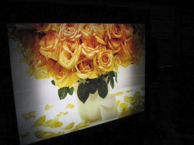 01.MasterCard.SunTrust.UnionStation.NE.WDC.19November2010