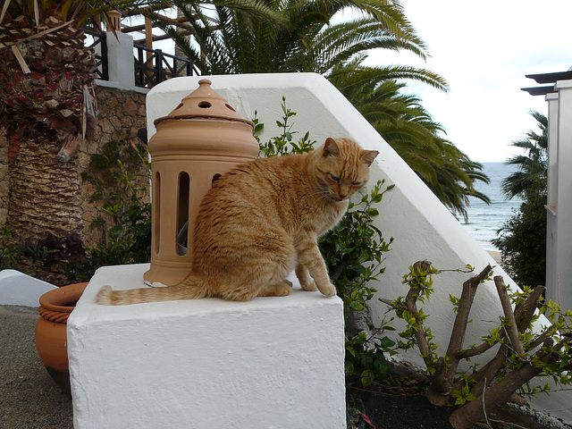 chat des canaries
