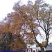 Fall Colors in Luzna u Rakovnika, Bohemia (CZ), 2010