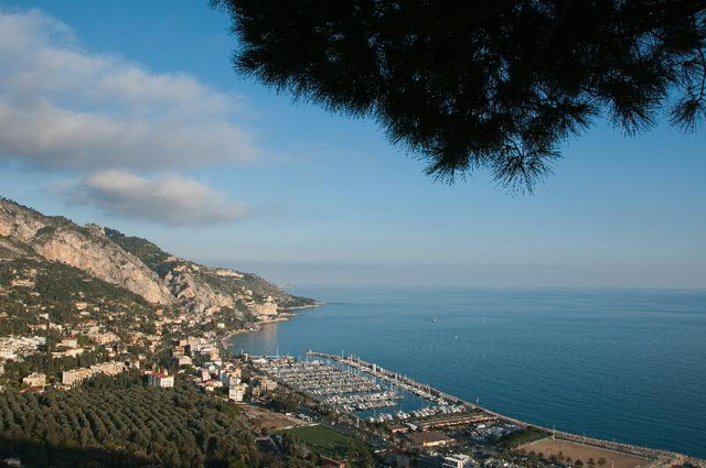 olive grove and the port